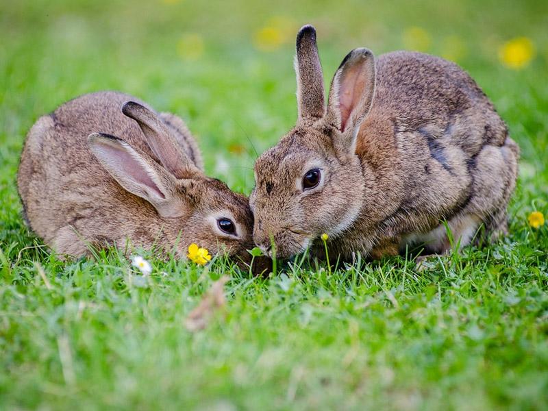 alimentacion-conejos